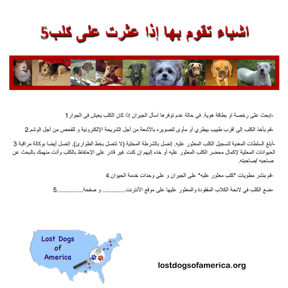 LDA-Arabic 5Things LOST Flyer