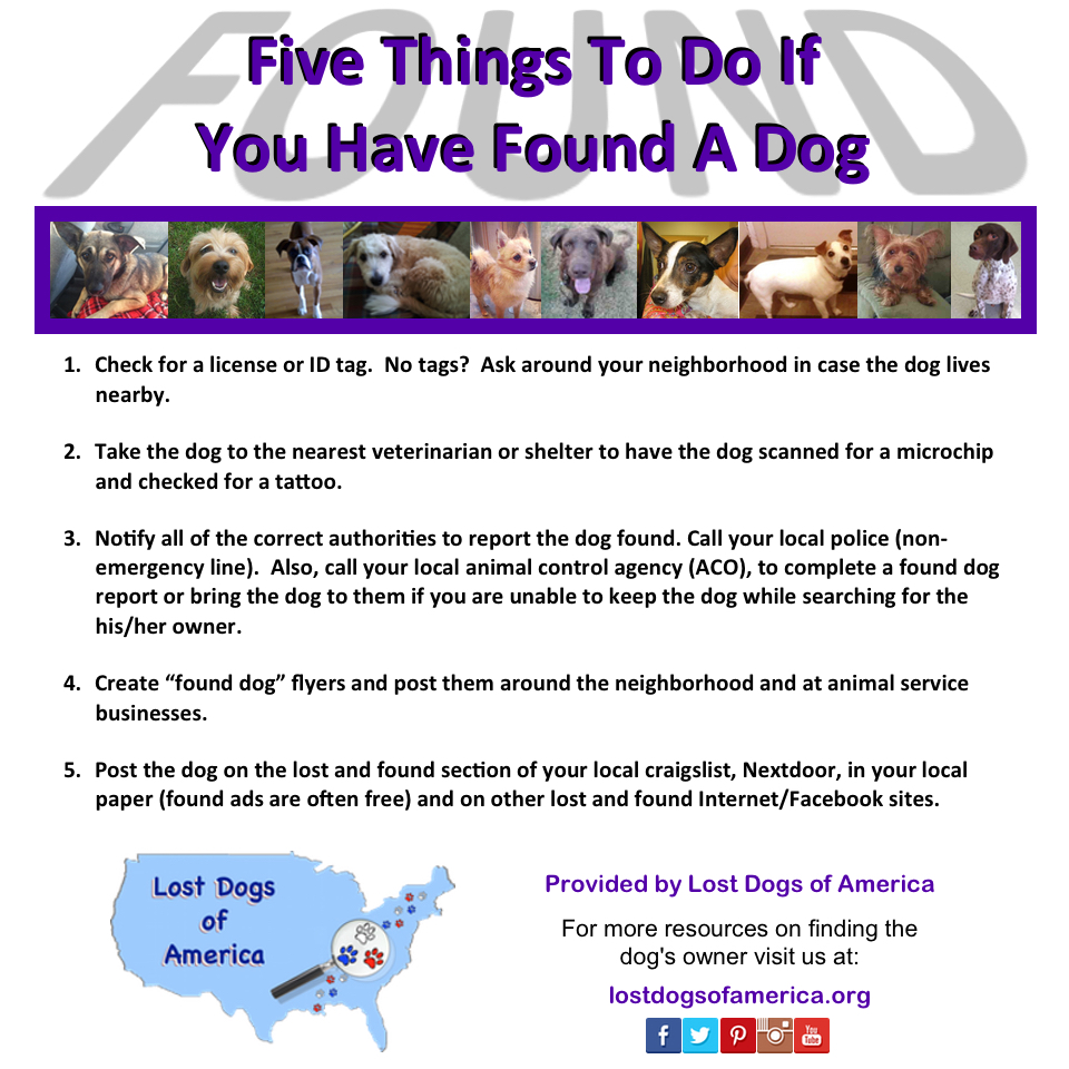 5 Things To Do If You Have Found A Dog | Lost Dogs of America