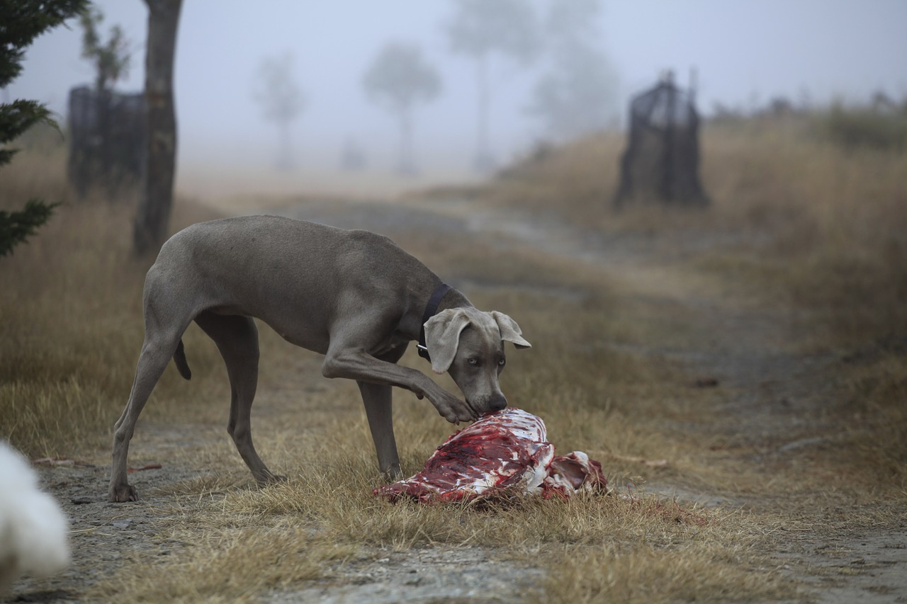 dog eating carcass