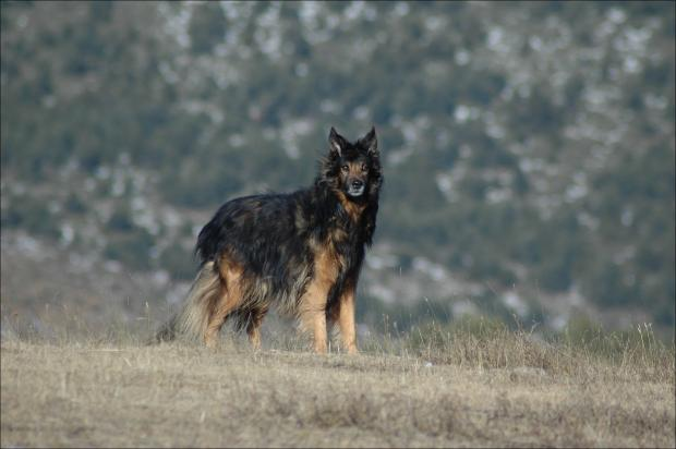 Where Can You Find Wild Dogs