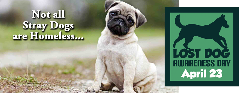 """a0f03b3d9b0f In the world of animal advocacy, adoption efforts of """"homeless"""" dogs in  shelters and rescues is a major focus. National Lost Dog Awareness Day  places a new ..."""