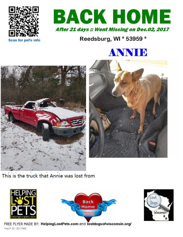 Illinois Car Accident Dog Lost