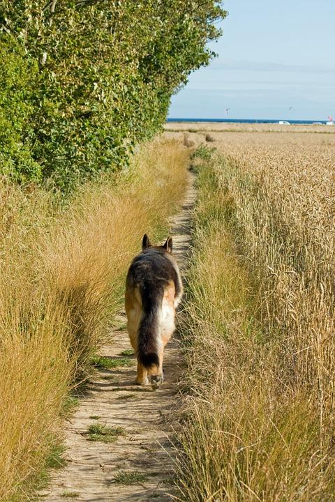 Dog at field's edge